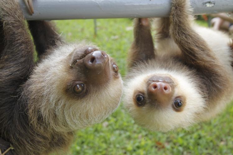gambit-sloth